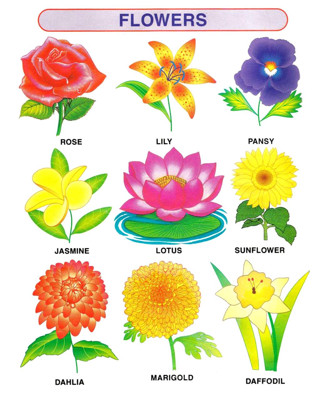 Kids Learning Center - Flowers